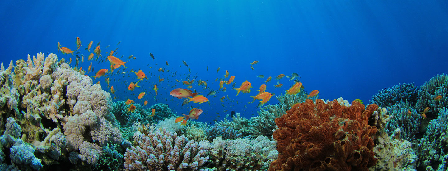 Surfrider's Support for 30x30: Why We Need to Protect Ocean Habitat