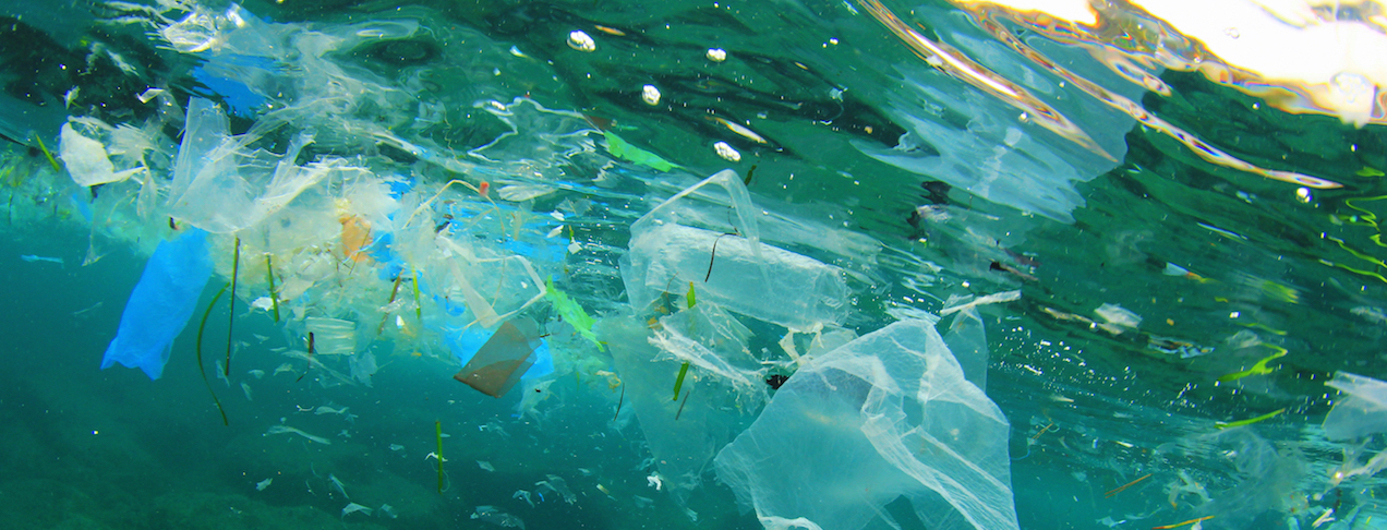 Addendum To Plastic Bag Law Activist Toolkit Now Available