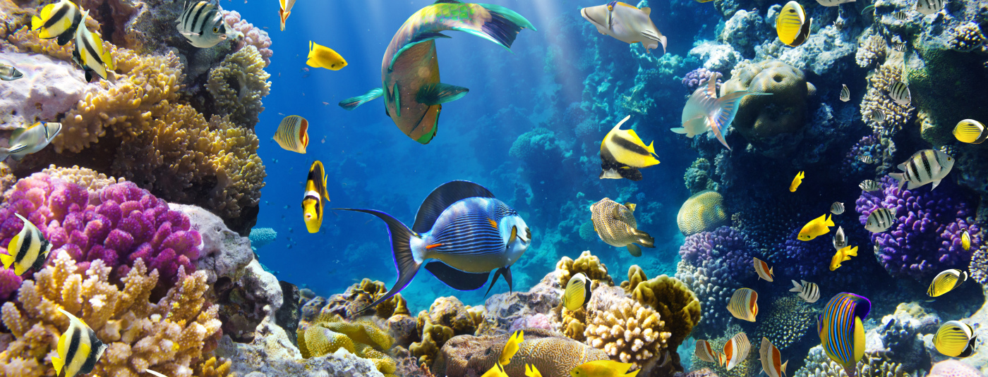 Coral Reefs—The Crown Jewels of Our Ocean