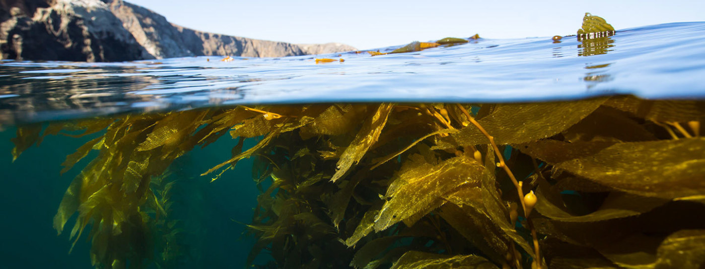 "Congressman Huffman Introduces ""Keeping Ecosystems Living and Productive (KELP) Act"""