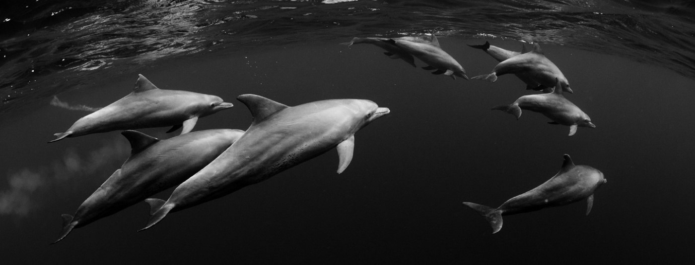 Surfrider Files Suit to Protect the Gulf of Mexico from Seismic Testing